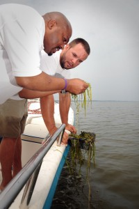 Dr. Stacy Nelson works with a student and a researcher on the Roanoke Sound near Corolla, NC, studying the effects of run-off and aquatic plant life.